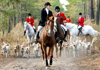 Fox Hunt in the Lowcountry